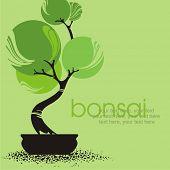 pic of bonsai  - vector stylized bonsai - JPG