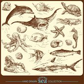 stock photo of shell-fishes  - big sea collection  - JPG