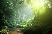 Rainforest. Morning sunlight