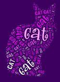 Постер, плакат: Кошка слов