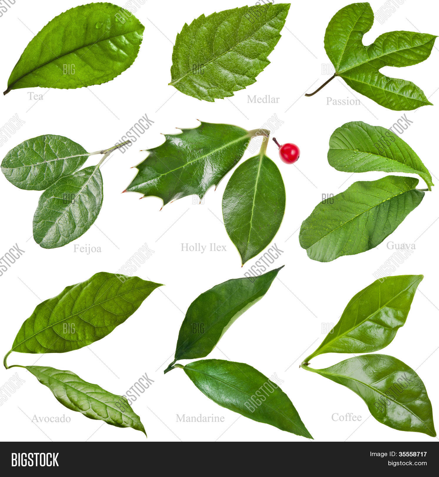 Related keywords suggestions for hojas de arboles frutales for Arboles de jardin de hoja caduca