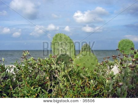 Oceanview Cacti