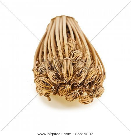 toothpick plant , ammi visnaga (Apiaceae) isolated on a white background