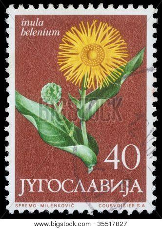 YUGOSLAVIA - CIRCA 1958: A stamp printed in Yugoslavia shows elecampane, series, circa 1958