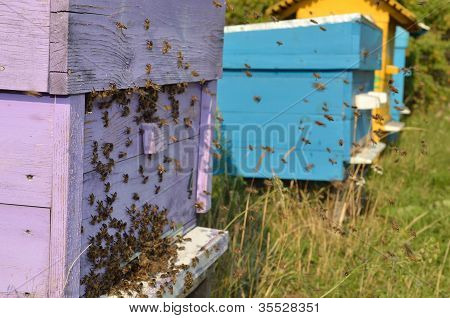 Bees are returning home