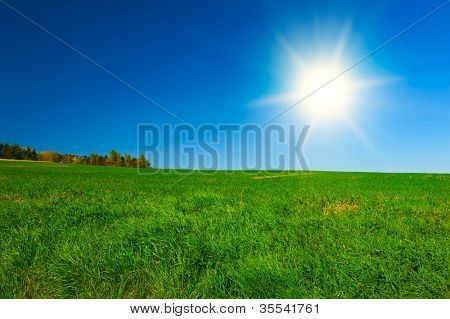 Beautiful spring shot with a  meadow lit by a shining sun