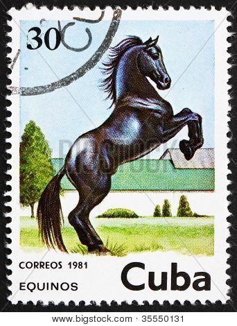 Postage stamp Cuba 1981 Horse, Equus Ferus Caballus