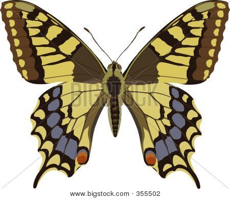 Picture or Photo of Butterfly drawing