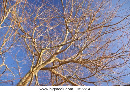 Bold Tree Branches