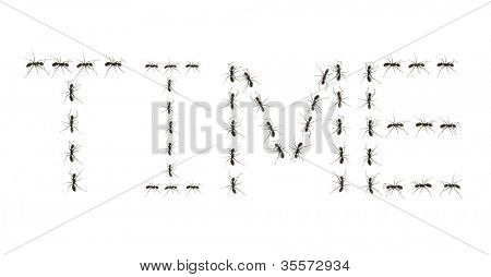 ants assembled to spell the word time