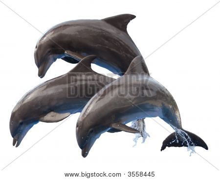 Dolphins Isolated