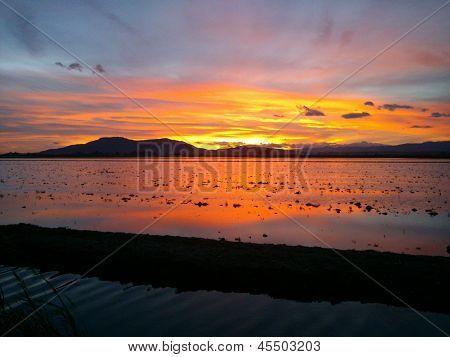 beautiful sunset in the Ebro delta
