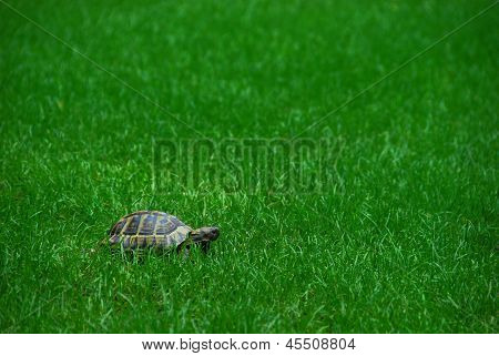 Grass and a turtle