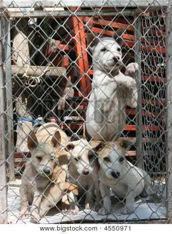 Puppies Kept In Bad Conditions