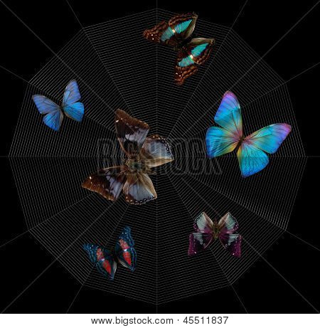 Butterflies And Spiderweb