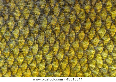 Real Tench Fish Scales Background