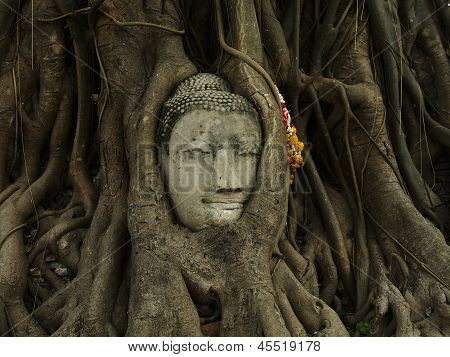 Head of Sandstone Buddha overgrown by Banyan Tree, Ayutthaya historical park, Thailand