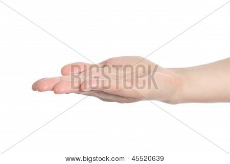 Diagonal View Of A Woman Hand With Palm Up