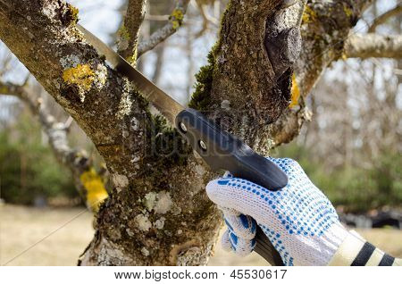 Hand Cut Trim Fruit Tree Branch Hand Saw Spring