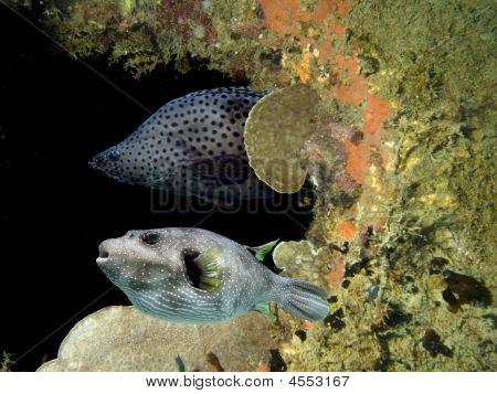 Coralcave