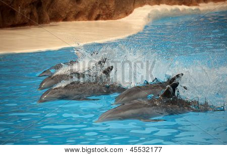 Fast swimming dolphins