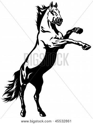 Stallion Black White