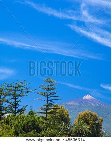 Northern  Tenerife, View Over Tree Tops Towards Teide