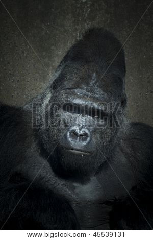 Gorilla Low Key