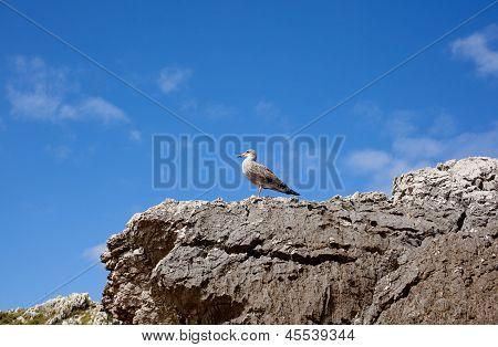 Bird on the rock