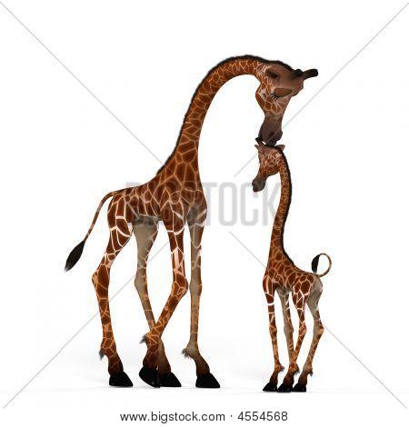 cute Giraffe mit herrlichem funny face