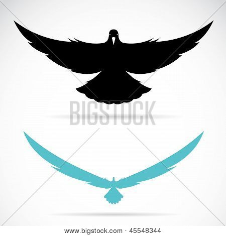 Vector image of an bird (pigeon)