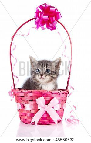 Gray Kitten In A Pink Elegant Basket With A Bow.