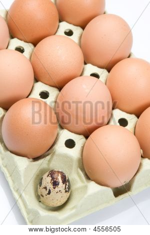 Differents Eggs