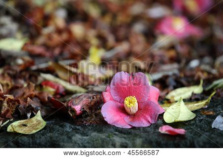 Blüte-stilleben