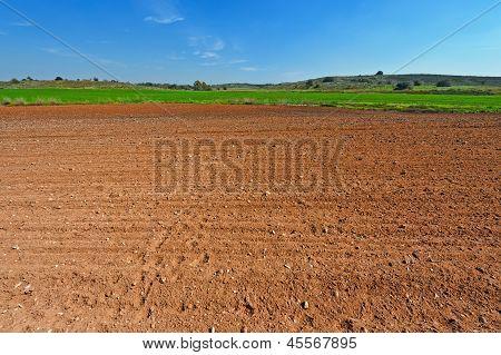 Israel Field