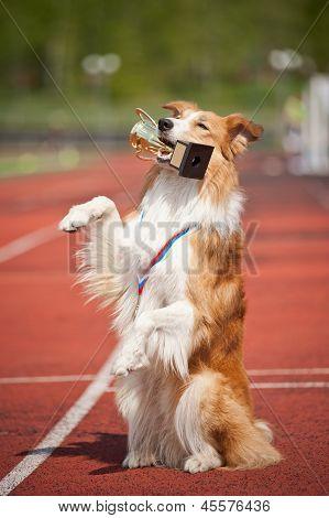 Border Collie Dog Wins