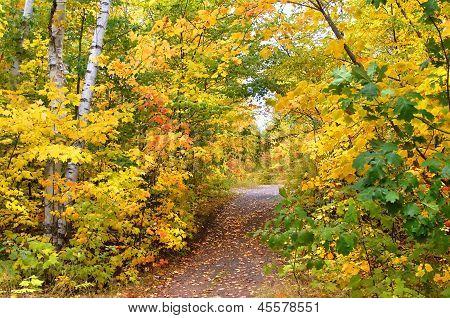 Autumn Tunnel To Hungarian Falls
