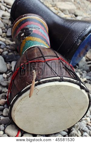 Mantis Is Sitting On The Drum Djembe