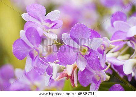 Orchid Flora