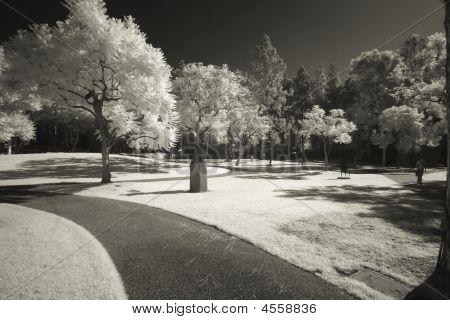 Murphy Sculpture Garden Infrared Sepia