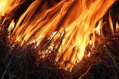 image of inflamed  - big body of flame inflaming in a forest - JPG