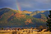 Montana Gold Rainbow Yellow Tamarack Trees In The Hills Fall Col