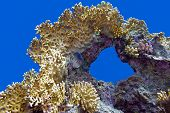 foto of fire coral  - coral reef with great fire coral at the bottom of red sea in egypt - JPG