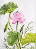 stock photo of dragonflies  - Original art watercolor painting of lotus and dragonfly Asian style painting - JPG