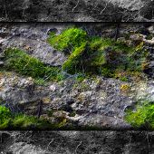 picture of cobweb  - texture walls mold moss and cobwebs background your message wallpaper - JPG