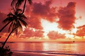 stock photo of west indies  - Palm Trees at sunset - JPG