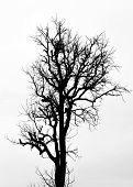 foto of dead-line  - A silhouette tree is isolated on white background - JPG