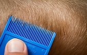 picture of lice  - Using comb to search for nit bugs in hair - JPG