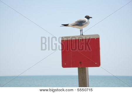 Bird On Empty Red Sign