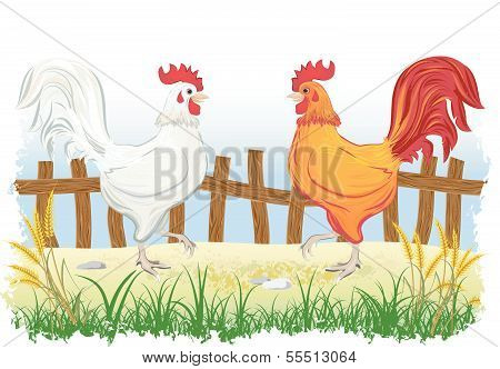 Roosters in country side outdoor scene with fence
